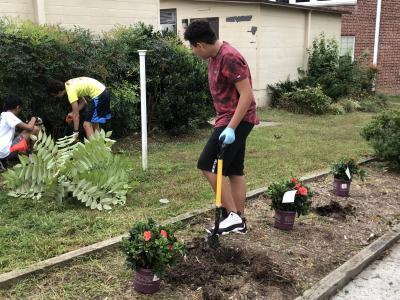 A student works to put in new flowering bushes on the side of the school.